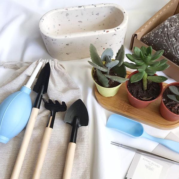 DIY plant kits