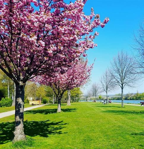 Frühling in Obernburg am Main
