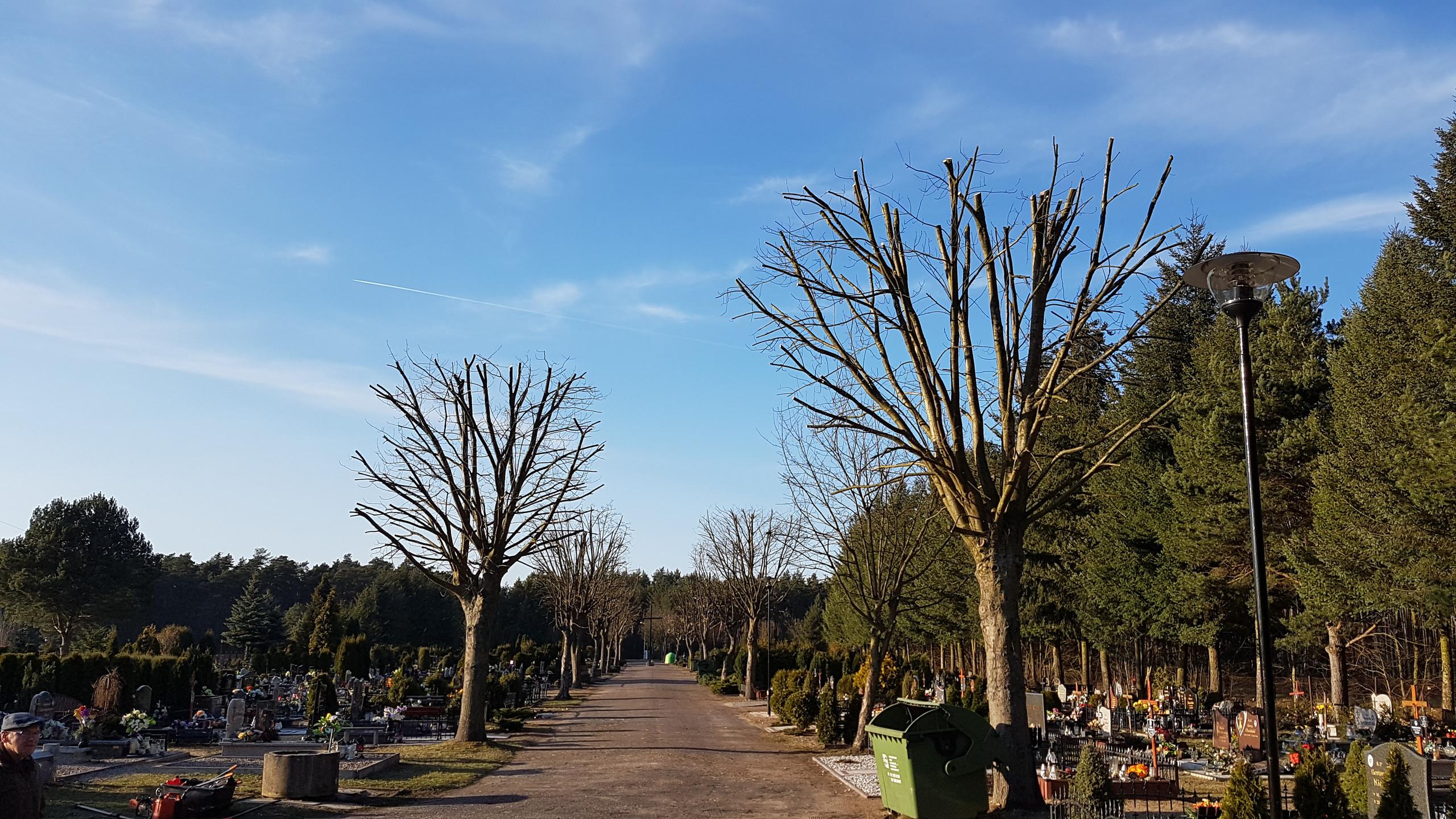 Drzewa po przycince