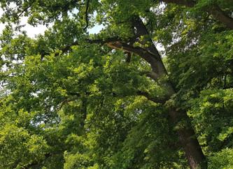 Pielęgnacja drzew na terenie zabytkowego parku