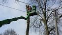 Wycinka drzew, pielęgnacja drzew - cennik prac