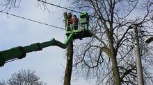 Wycinka drzew na terenie prywatnym - aktualne regulacje prawne 2017r.