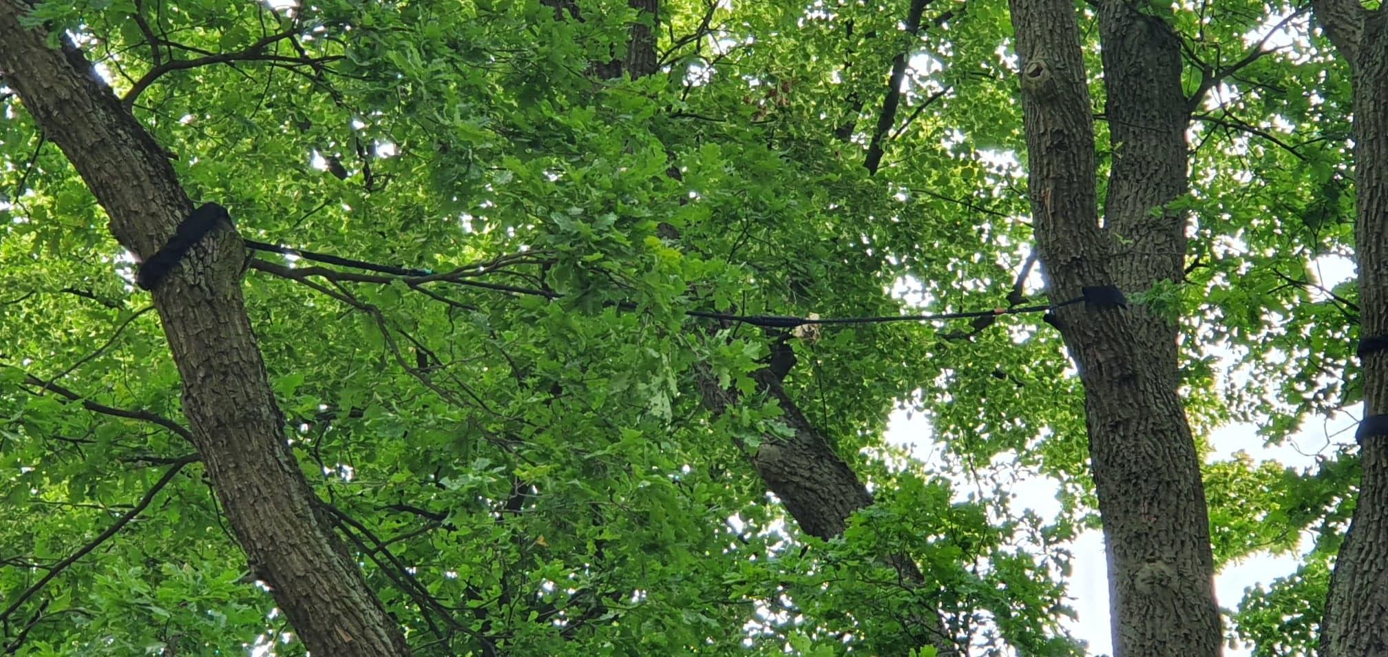 Wiązania_elastyczne_drzew_z_amortyzacją.