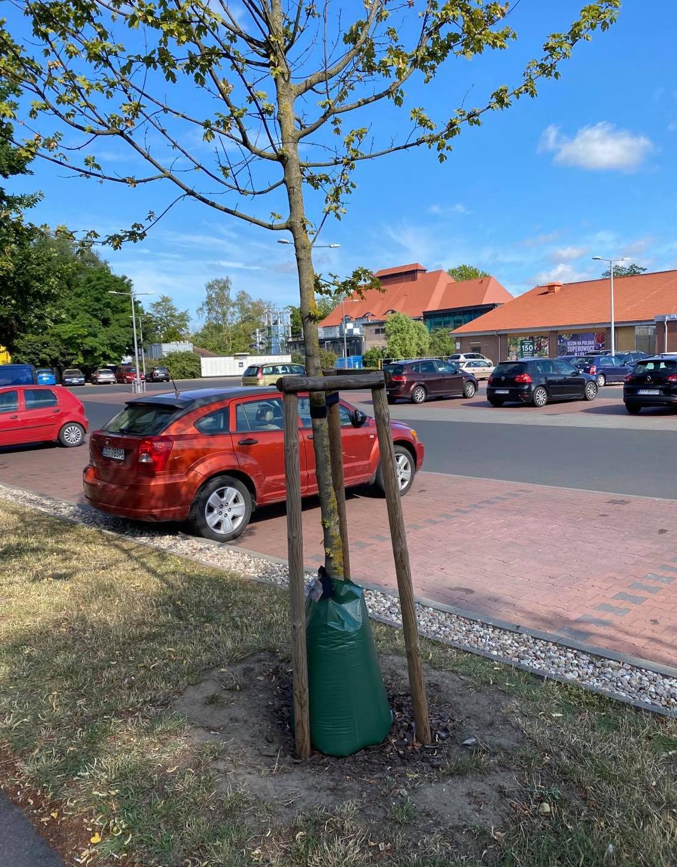 Worki nawadniające drzewa