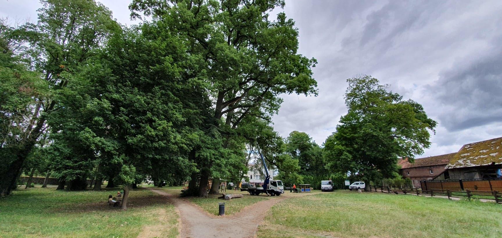 Pielęgnacja drzew zabytkowych