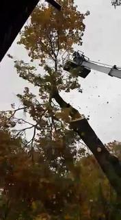 Wycinka drzew trudnych z podnośnika