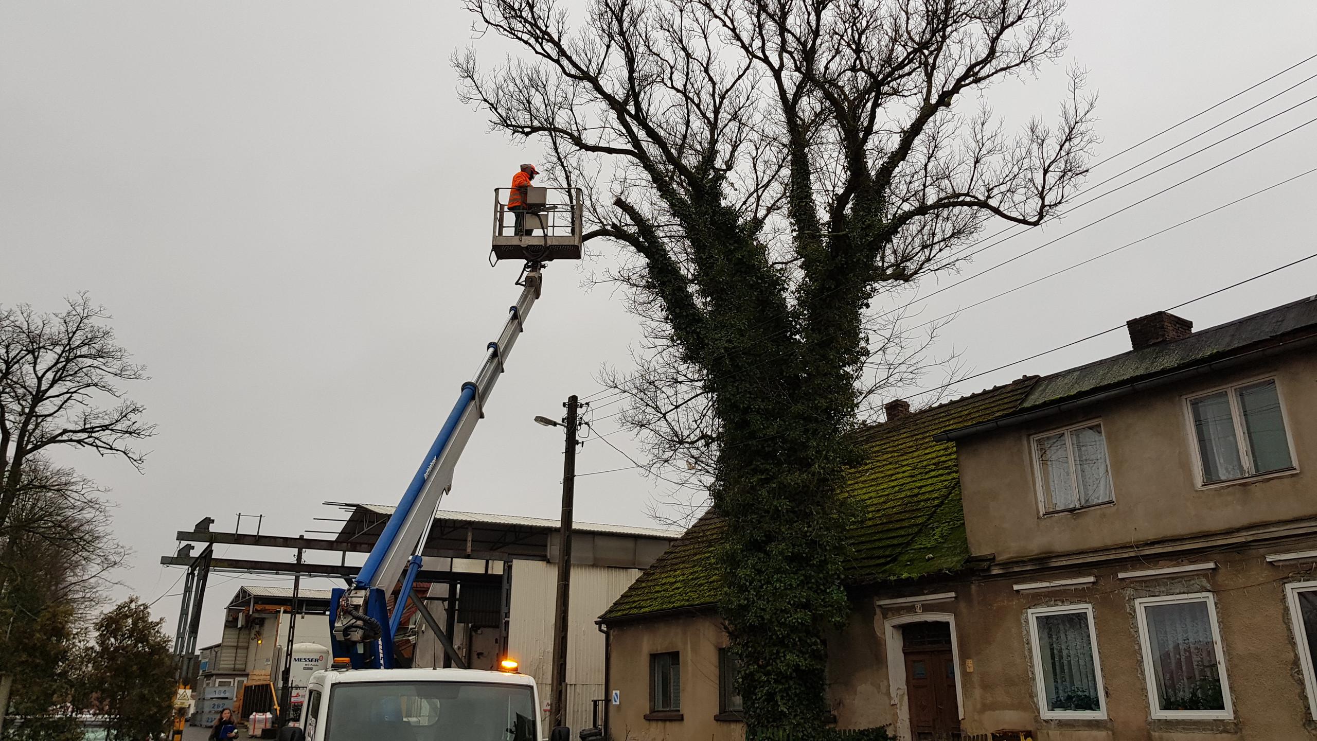 Wycinka drzew trudnych 3