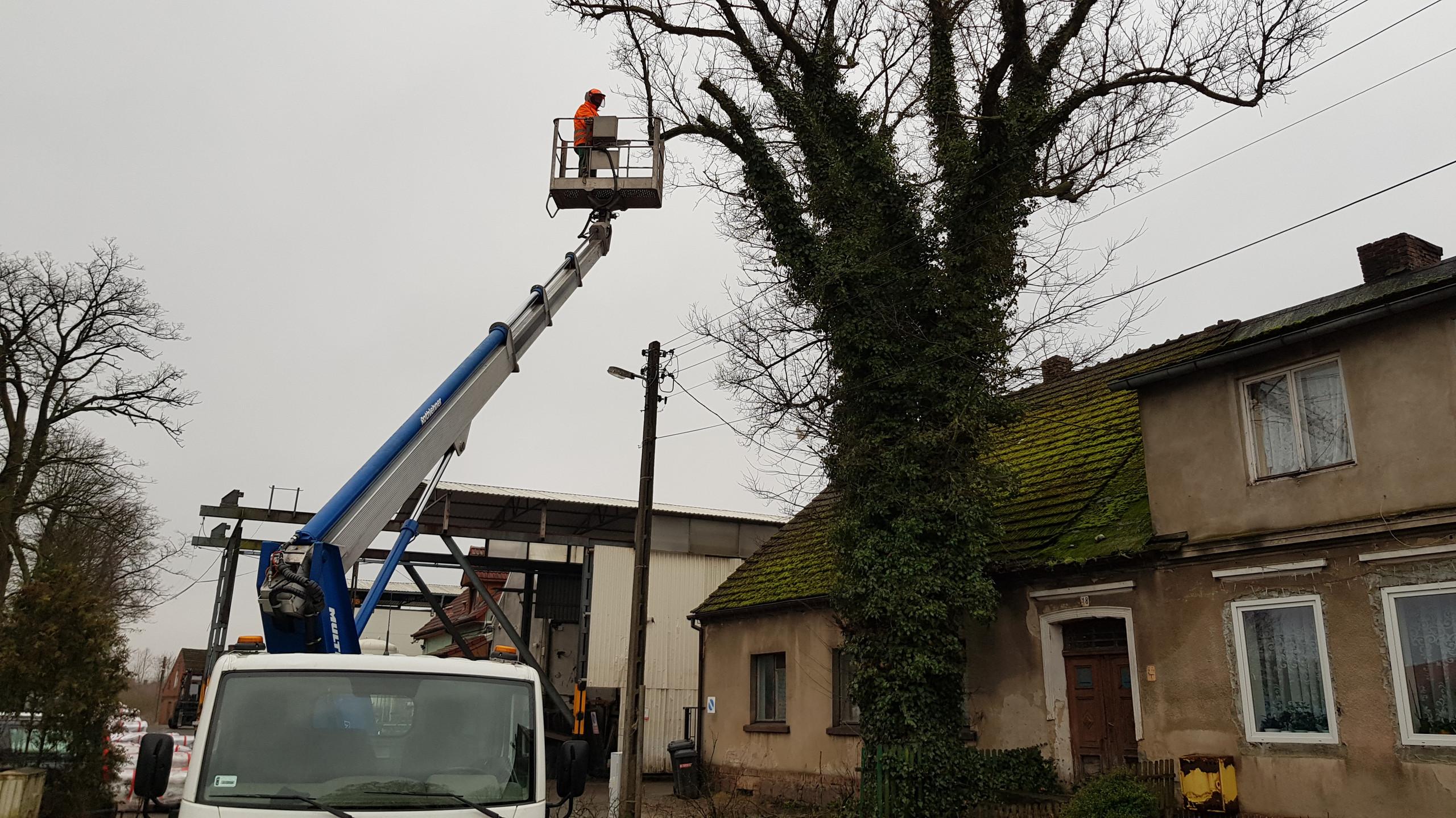 Wycinka drzew trudnych 2