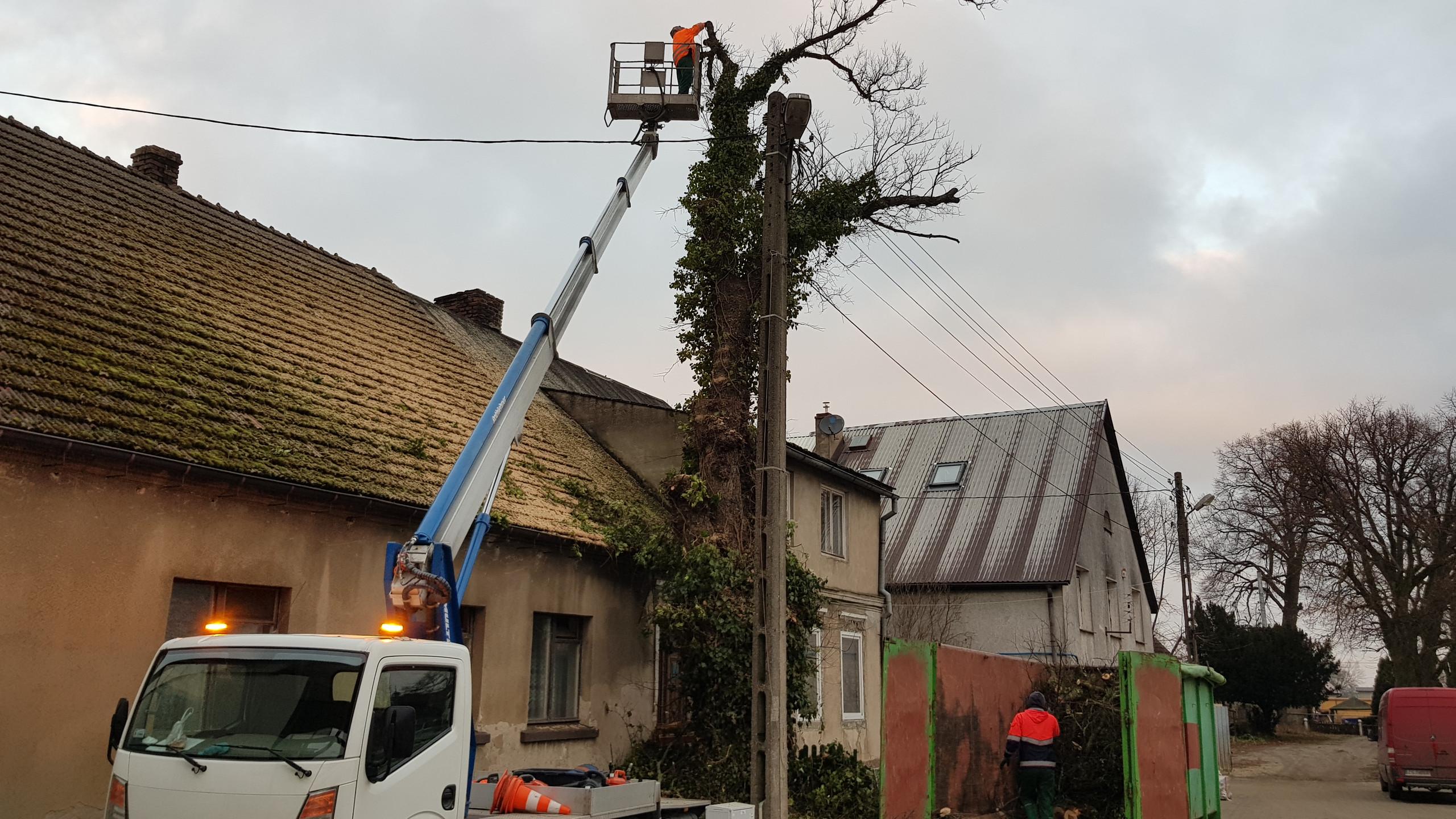 Wycinka drzew trudnych 7