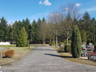 Przycinka sanitarna drzew