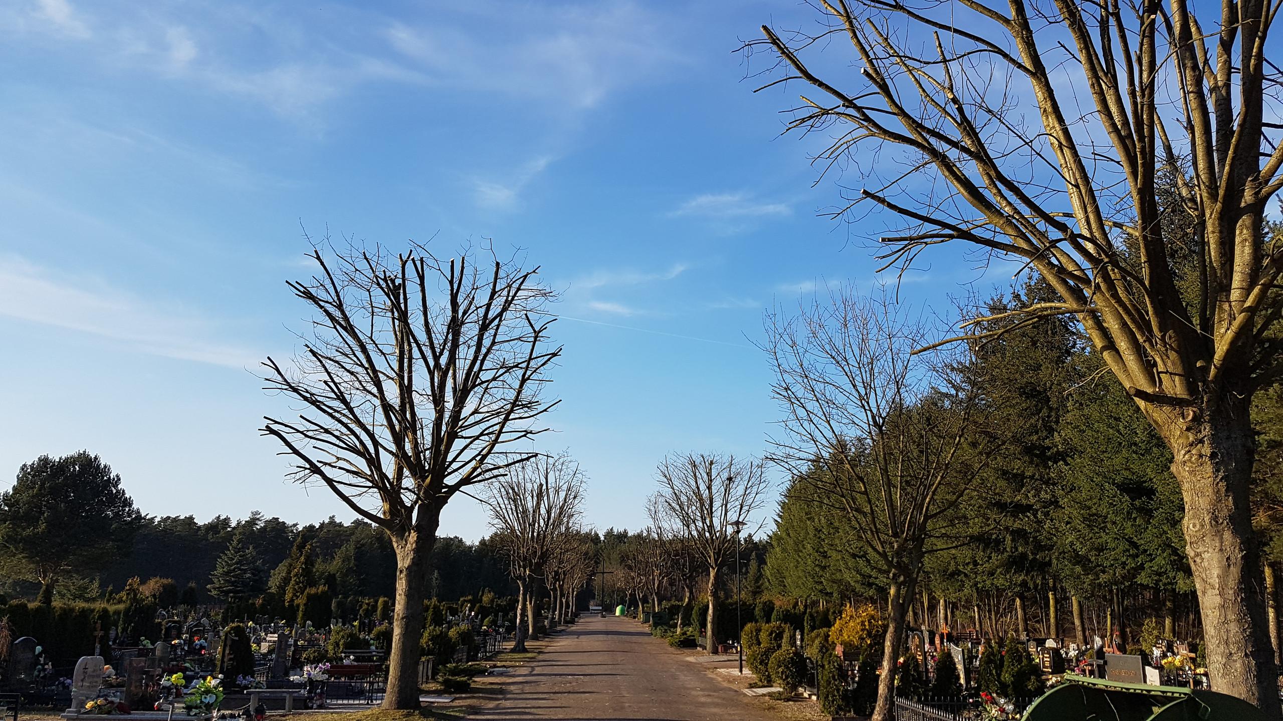 Uformowane korony drzew