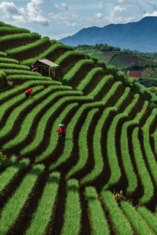 The onion fields of Argapura