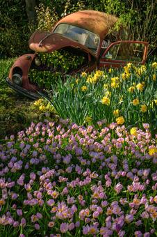 Beetle between the tulips