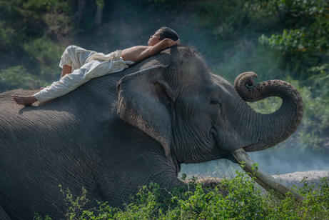 Taking a nap on the back of an elephant