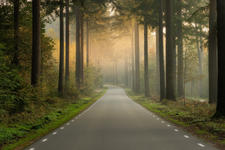 An empty road in the forest