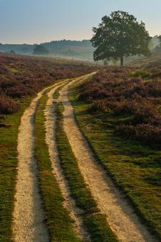 Dirt road between the heather