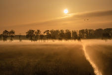 Misty morning in the Betuwe