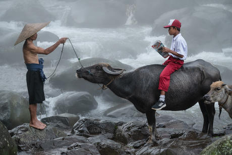 Going to school on a water buffalo