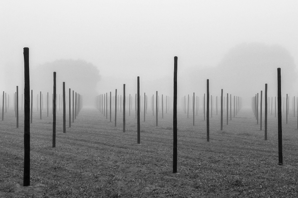 Eddy_Verloes_13.Maze in the mist -