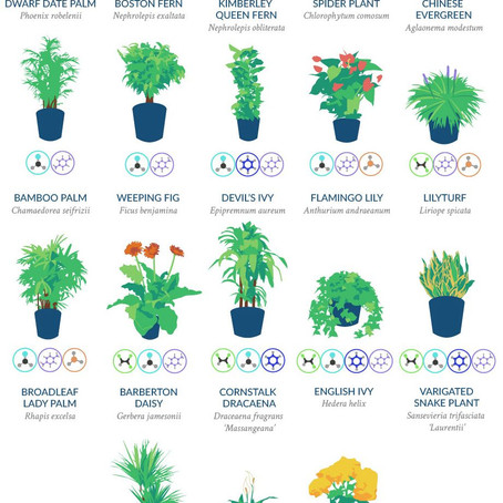 Design Your Health: Simple Ways to Bring Nature Into the Home & Life