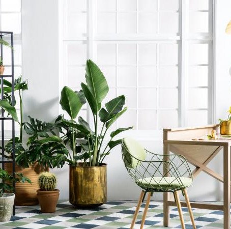 The Top 3 Indoor Plants to Detox Your Home - Design Your Lifestyle