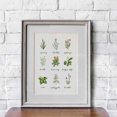 Erdők, mezők növényei print A4