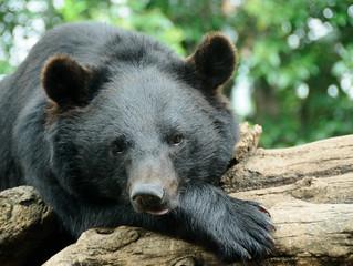 講演会「私たちが知らないクマの生態・クマの魅力」のご案内