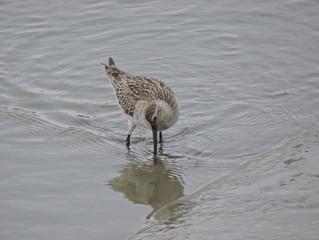 鴨緑江(おうりょくこう)の広大な干潟へ