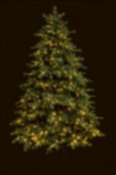 Weihnachtsbaum bild.jpg