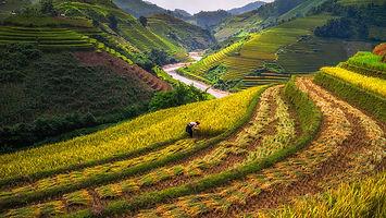 Good Time 889 Organic - Rice place
