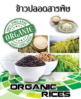 Good Time 889 Organic - Organic Rices