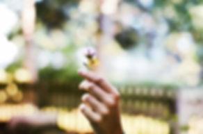 flower-1210067_1920.jpg