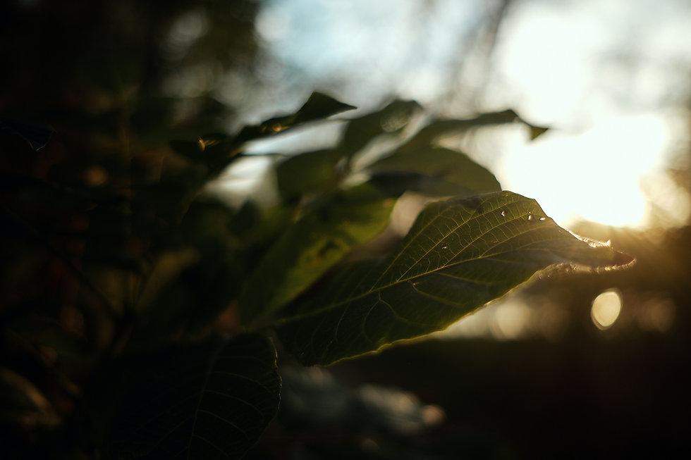pexels-silviu-cozma-4448193.jpg