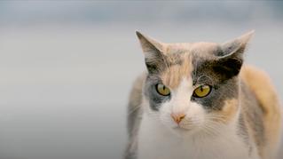 Tier zuliebe - Tierärzte auf Kreta