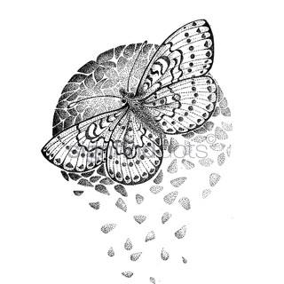 """15. Rødlig perlemorsommerfugl, kritisk truet – """"The planet is fragile like a butterfly wing"""""""