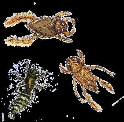 Insekter i åen