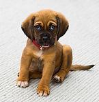 puppy needs training
