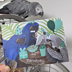 My pet African grey parrot inspired my d