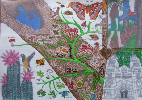Variations image 1 - Phylogenetic Tree 1