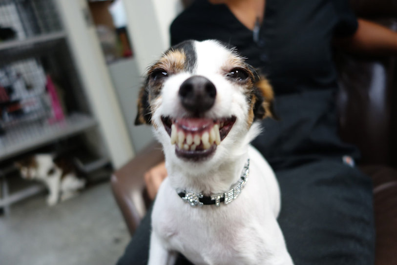 Pet Dental Care Appontment