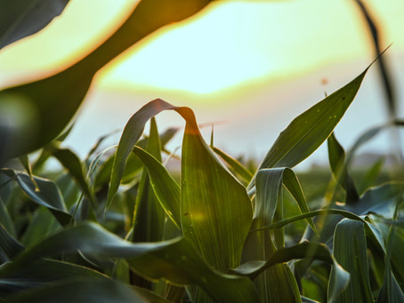 FMG Industry Analysis: Crop Farming