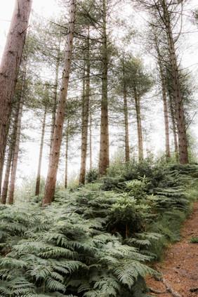 greens 6.jpg