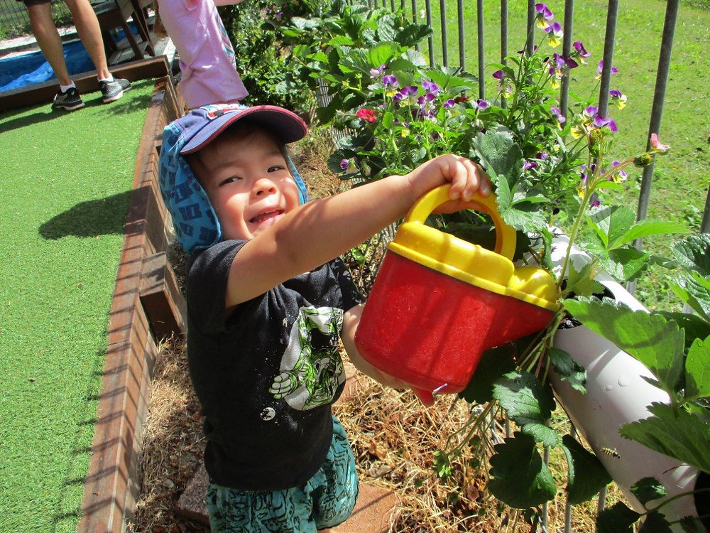 Watering and getting in amongst the flower, herb and veggie garden