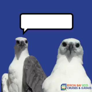 Meet Stu & Sue, as they present Eagle Eye News!
