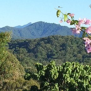 Top 5 things to do in the Byron Shire
