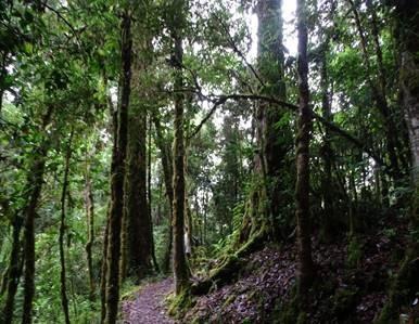 Costa Rica Rainforest Eco Tourism