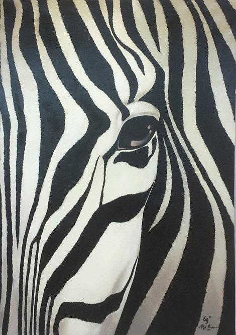 FA015, The Zebra