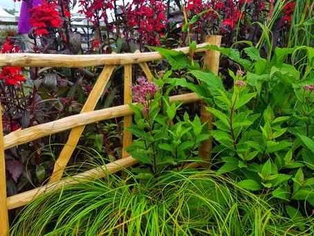BBC Gardeners' World Live Plant List