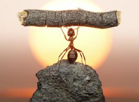 Você conhece a parábola da demissão da formiga desmotivada?
