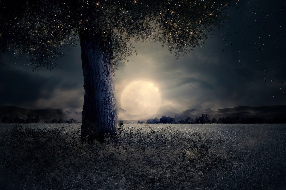 full moon tree and fields
